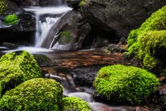 OLYMPIC NP 21