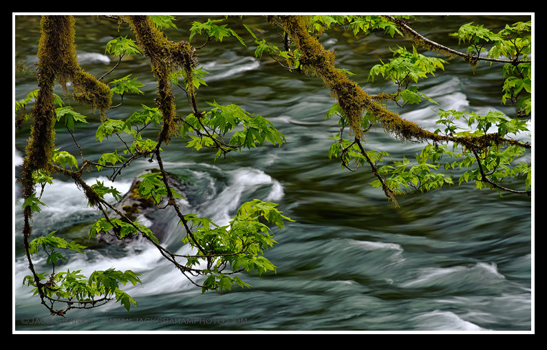 hoa river, olympic national park