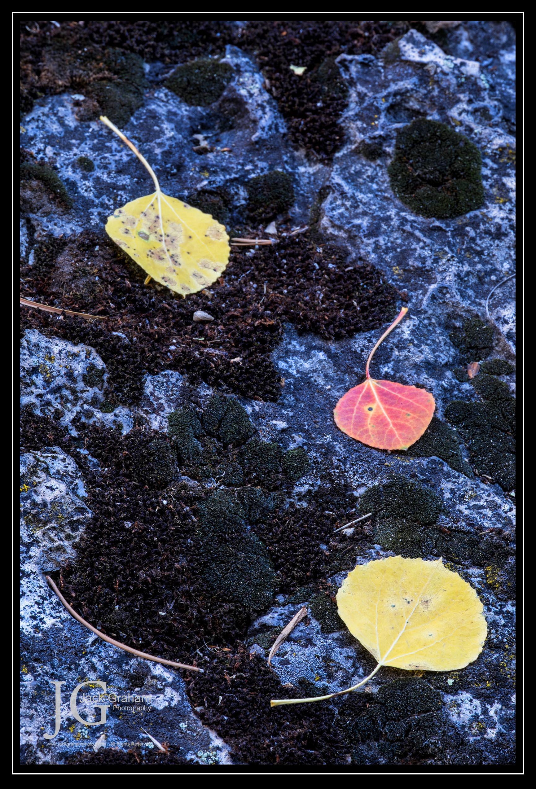 Eastern Sierra - aspen leaves on granite