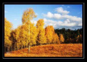grand tetons - fall golden trees